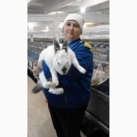 Продам тушку кролика