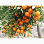 Продам Грейпфрут оптом и в розницу с доставкой, прямая поставка с Турции, цена договорная