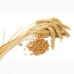 Куплю пшеницу фуражную и 3 класс по луганской области