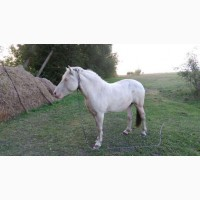 Лошадь, кобыла