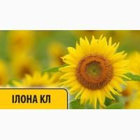 Подсолнечник Илона КЛ