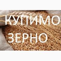 Закуповуємо пшеницю фуражну по Стрийському районі