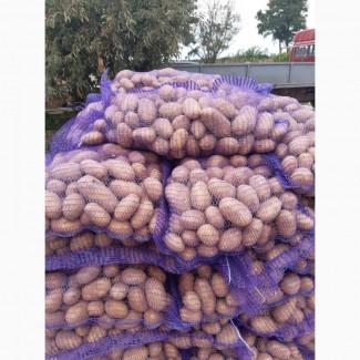Продам картоплю, продовольчої(для магазинів) та бюджетної якості