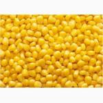 Оптом кукуруза