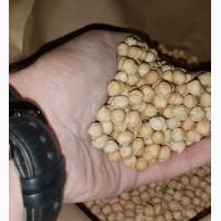 Семена Нута HOPE-канадский ярый трансгенный продовольственный сорт нута