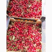 Продам вишню оптом с сада. Урожай 2019 года