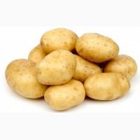 Поставка картошки, опт