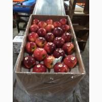 Яблоки на внутренний и внешний рынок