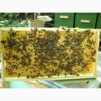 Пчелопакеты пчелы на рамках Рута комплект 5 рамок