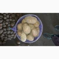 ТОВТРЕЙД IНВЕСТпродаёт украинский картофель, разных сортов.Работаем нал/безн.НДС