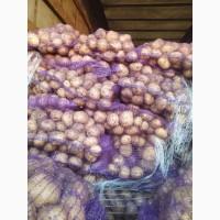 Продам картофель Ривьера