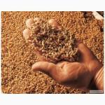 Продам солод пшеничный
