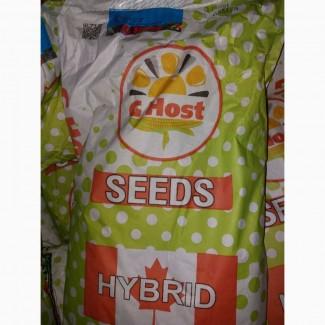 Продам гібрид кукурузи G HOST