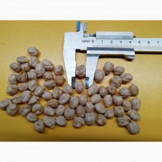 Семена нута Мексика (Израиль) очень крупный