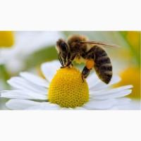 Куплю мед от 350 кг. Черкасская область ОПТ-МЕД