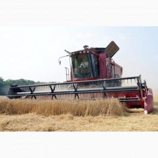 Продам пшеницу 2-й класс, 5-й класс, возможен экспорт