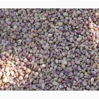 Калиброванные семена чеснока (воздушка) Любаша