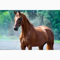 Продаём лошади мерины порода