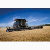 Покупаем пшеницу у производителя