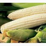 Семена сахарной кукурузы оптом