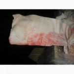 Продам Свиные шкуры из Польши глубокой заморозки. Ошпаренные. Доставка по Украине