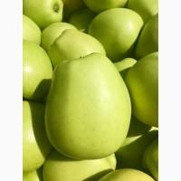 Продам яблука 1-го сорту із власного саду.Урожай 2017р