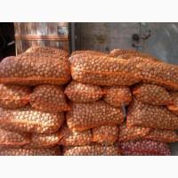 Продам грецкий орех (кругляк)