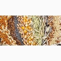 Оптовая компания заключит контракт по продаже зерновых