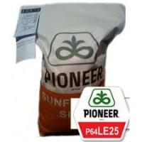 Посівний матеріал насіння соняшнику Піонер Е25
