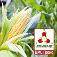 2017 рік! Насіння кукурудзи ДМС Гроно (Маїс) ФАО 260 кукуруза Маис