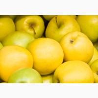 Продажа Крупных яблок.Лучшее Предложение