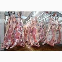 Оптовая продажа мяса по Киеву и Киевской области