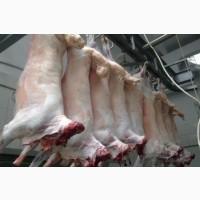 Продам мясо баранов и овец тушки, полутушки