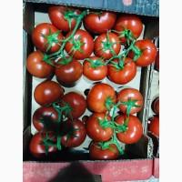 Продаём помидоры сорт высокого качества в тоннах из Турции