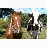Закупівля врх, коней, та дориз