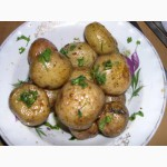 Семена почтой, картофель семенной, насіння картоплі поштою, картопля насіннева