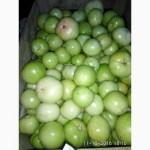 Зеленый помидор