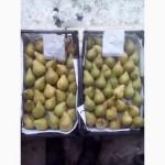 Продам грушу Ноябрську з холодильника. Ціна договірна