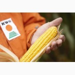 KWS, КВС, семена кукурузы Каталог гибридов, Цены