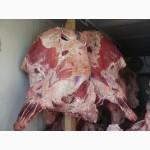 Продам говядину в полутушах и четвертях