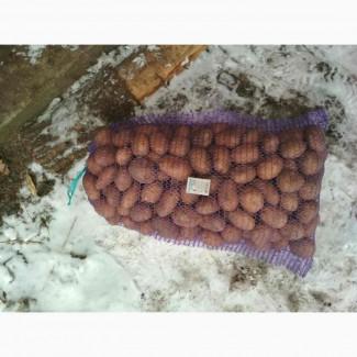 Продам картоплю оптом белароза, скарб 3.10