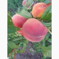 Продам персик от производителя