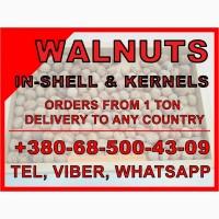 Грецкий орех на экспорт с доставкой Walnuts for export, delivery, Ceviz