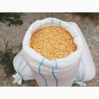 Продам сахарную кукурузу, Одесская обл, Измаил