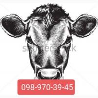 Заготівля ВРХ (бики до 45грн)