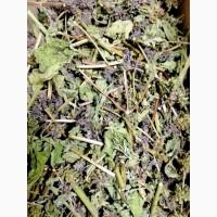 Чистец (трава) 1 кг