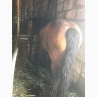 Куплю коней на м`ясо живою вагою