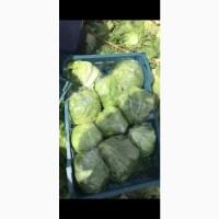 Продаём капусту Айсберг
