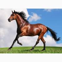 Куплю коней, лошат живым весом. Дорого