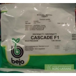 Голландские семена Bejo , Vilmorin, Никерсон - Цваан (Оптовые цены)